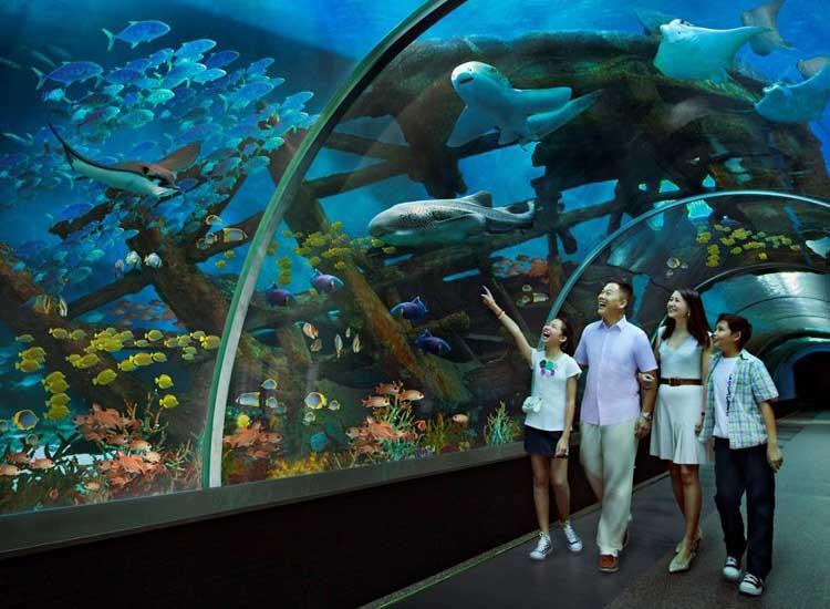 s-e-a-aquarium-singapore-1